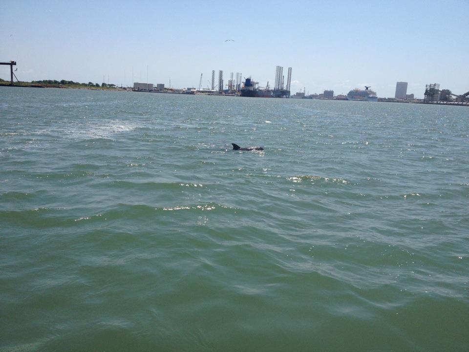 Dolphin Watching Tour Galveston